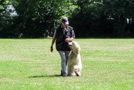 Windhund beim Teamtest