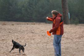 Whippet beim Dogfrisbee
