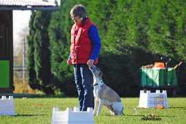 Whippet bei Rally Obedience