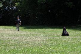 Afghanischer Windhund beim Teamtest