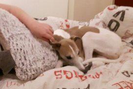 Whippet als Therapiehund im Kinderheim