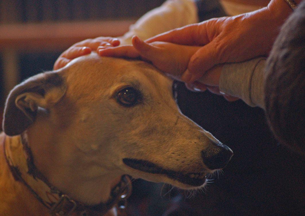 Katatjuta´s Greyhounds bei der Therapiearbeit