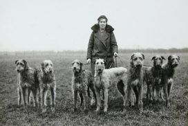 Deerhound Miss Bell
