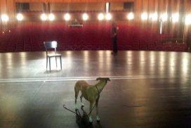 Whippet als Statist auf der Bühne