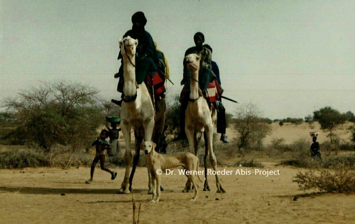 Tuareg mit Azawakh