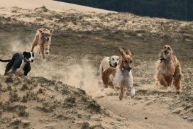 Windhundgruppe