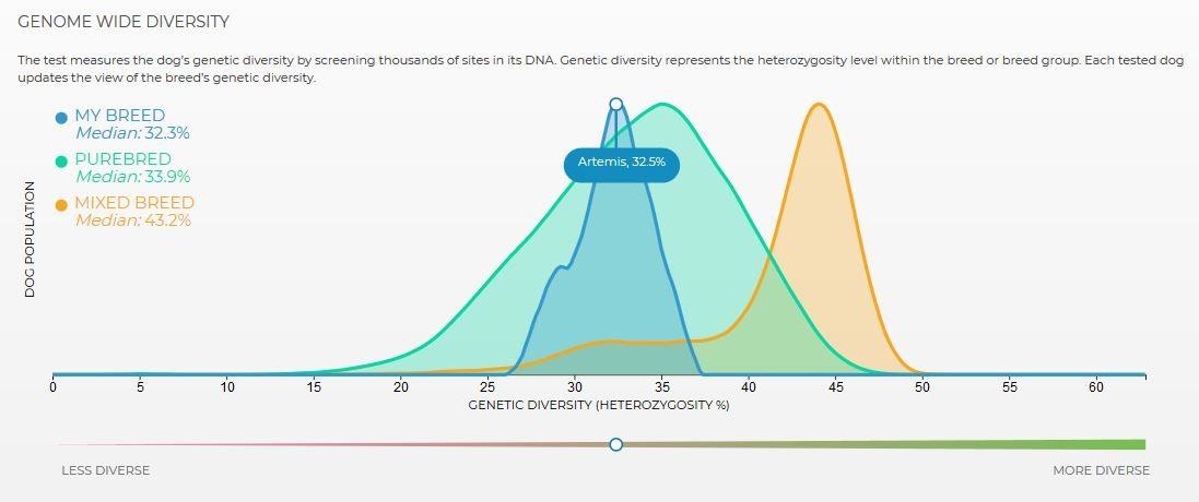 Genetische Diversität beim Silken Windsprite