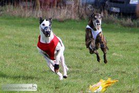 Greyhound Coursing