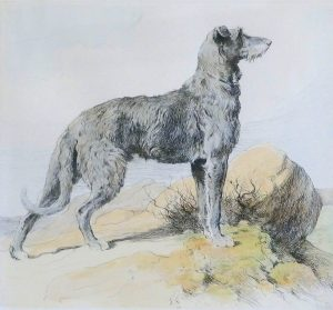 Deerhound Stich historisch